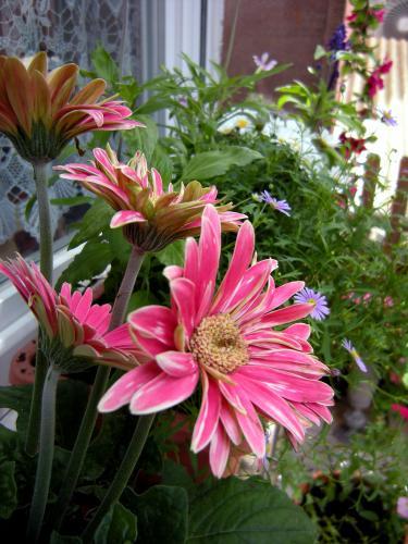 fouillis fleurs.jpg