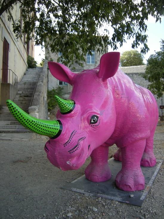 Rhino Arles 2010_2.jpg