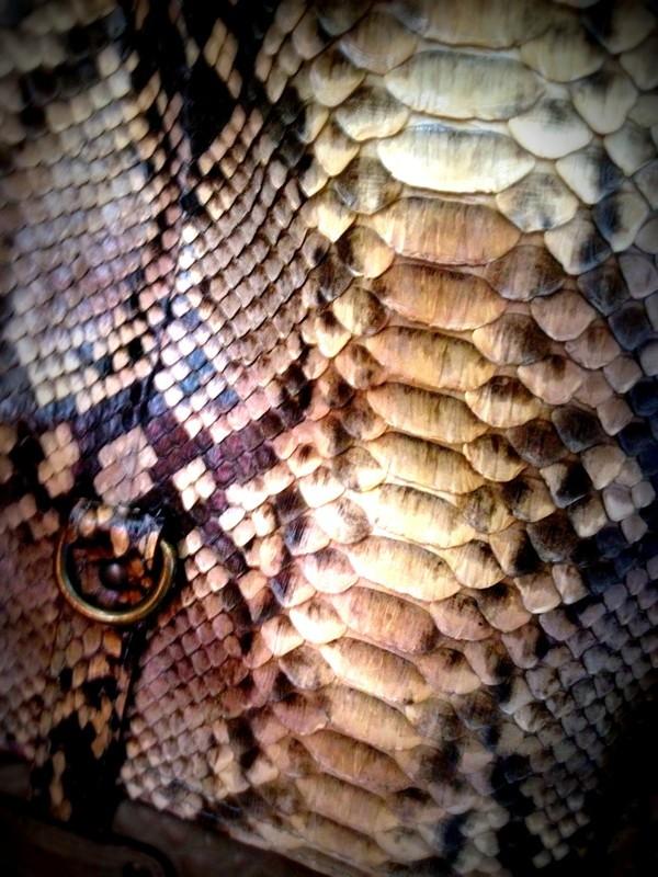 python detail3.jpg