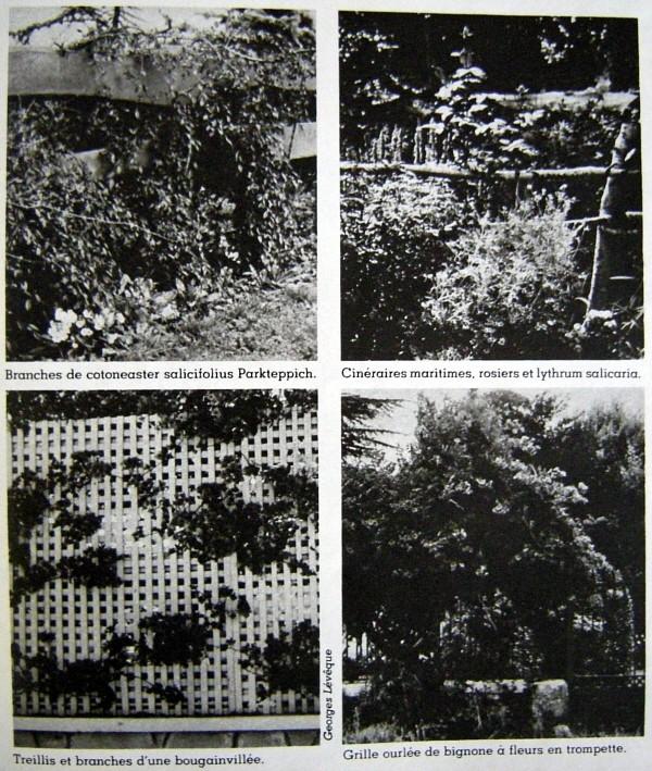 mur végétal.jpg