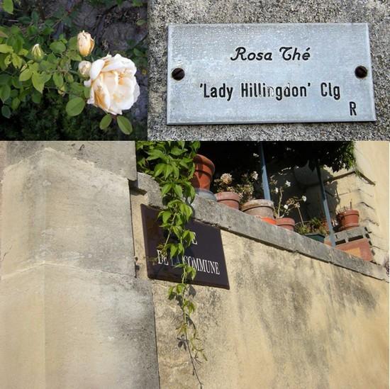 Roses anciennes.jpg