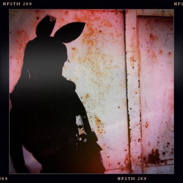 Bunny 2_1262.jpg
